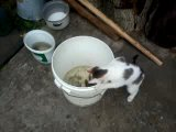 кошка ловит рыбу